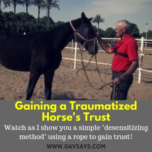 Gaining a Traumatized Horse's Trust: Using the Rope Method