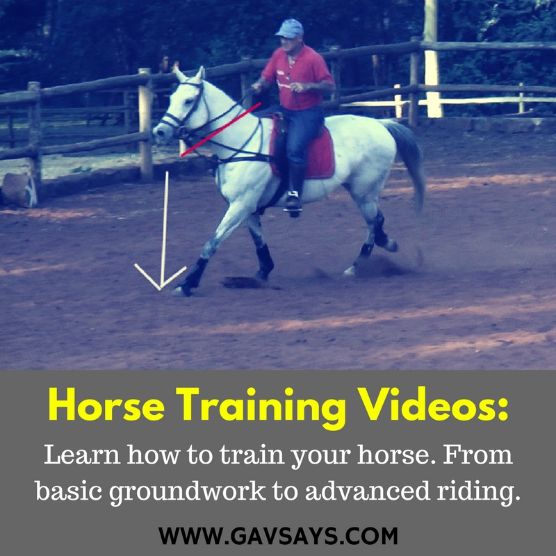 Horse Training Videos that will help you train a better horse...