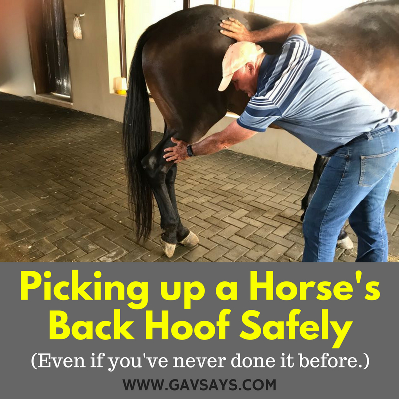 How to Pick up a Horse's Back Hoof Safely: Even if you have never done it before...