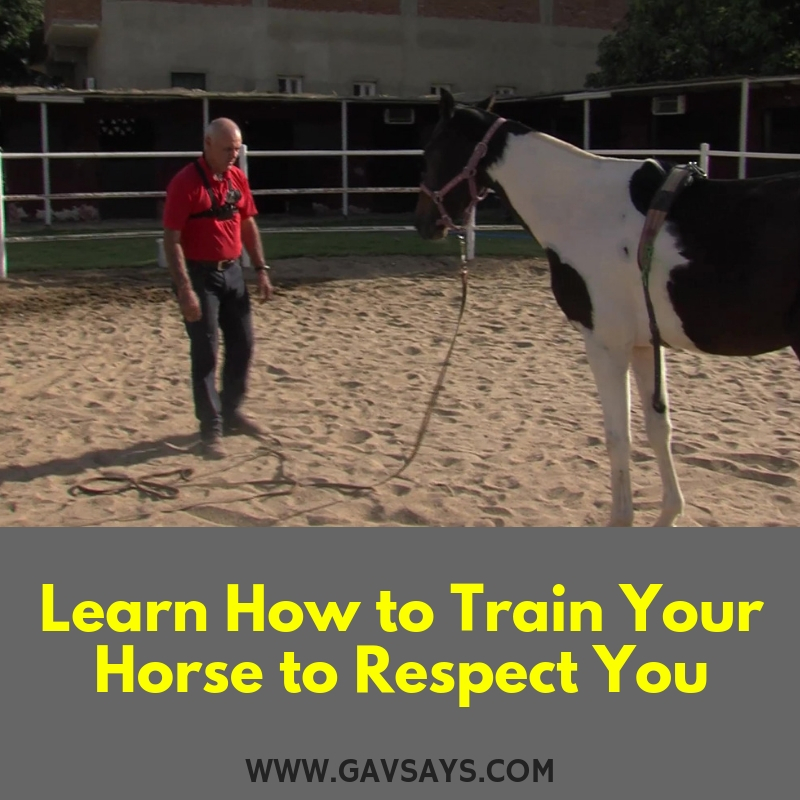 Learn How to Train a Horse to Respect You