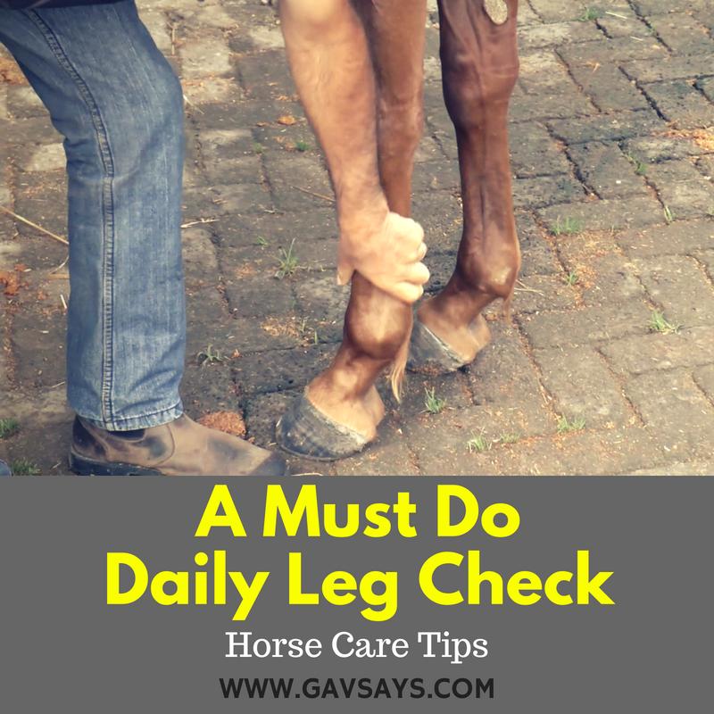 Daily Leg Checks You Must Do - Horse Care Tips