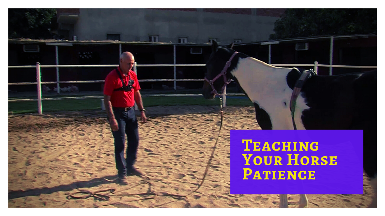 How to Teach Your Horse Patience ... On the Ground