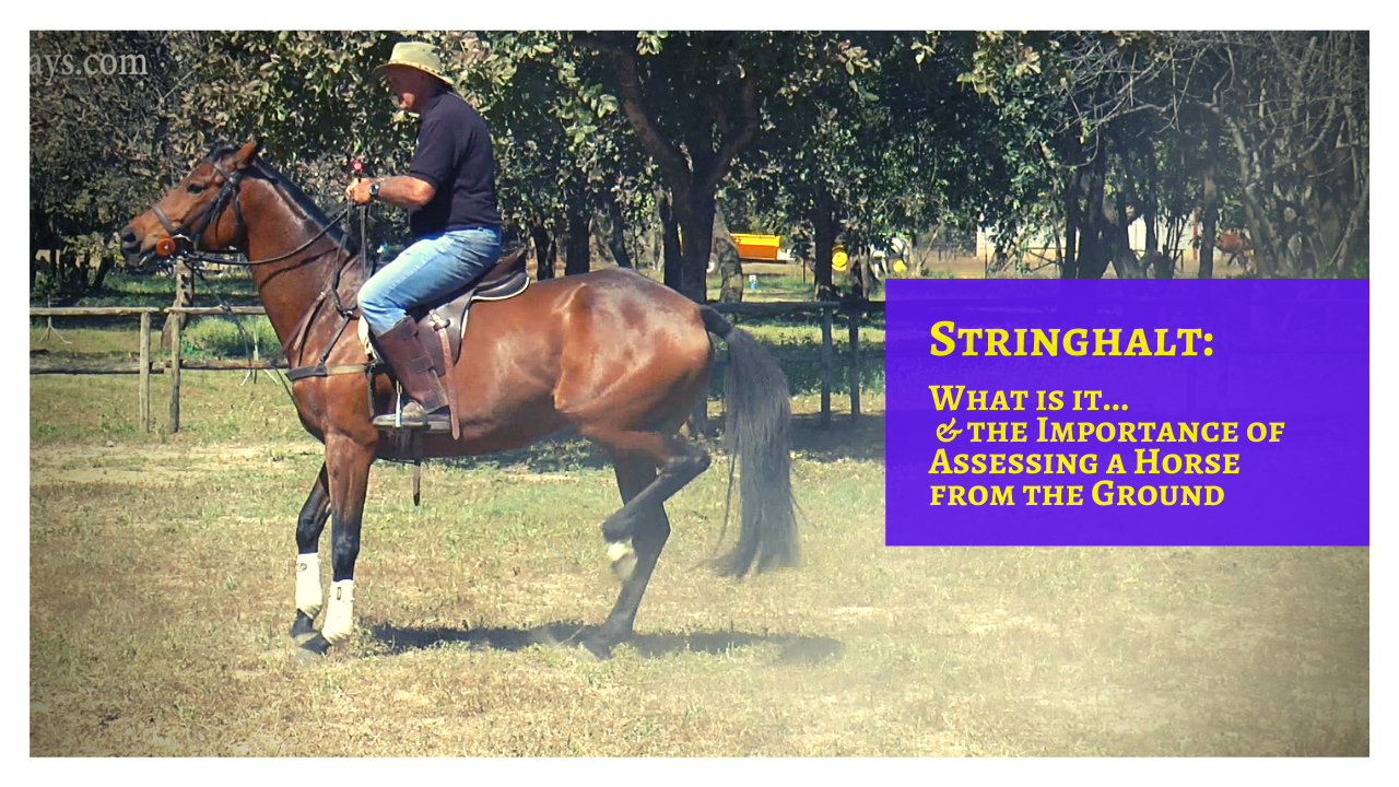 What is Stringhalt in Horses? - Training Horses with Medical Problems
