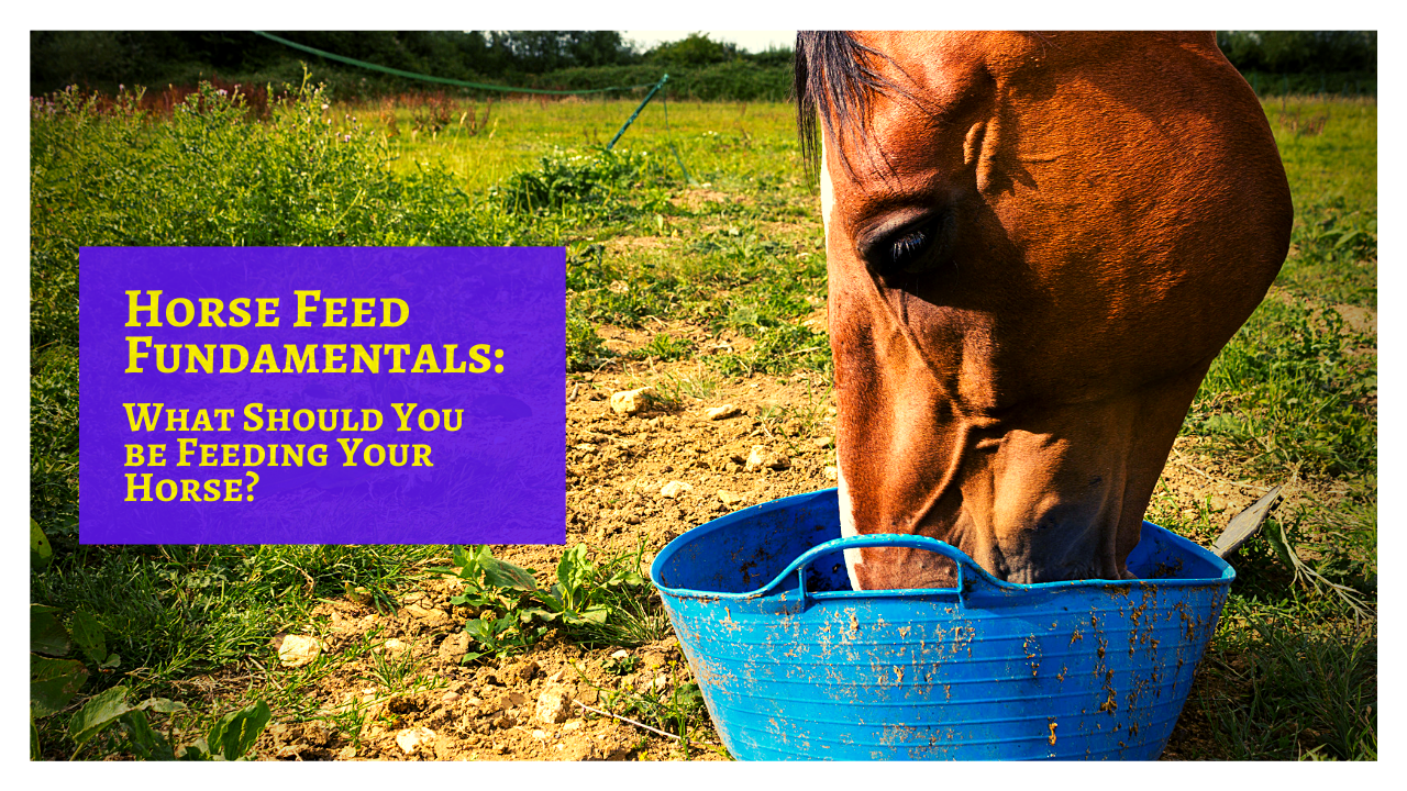 Horse Feed Fundamentals: What Should You be Feeding Your Horse?