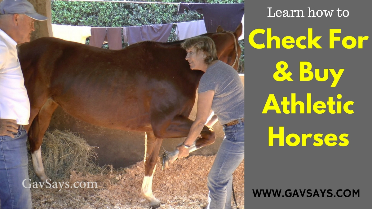 Learn how to check for and buy Athletic Horses