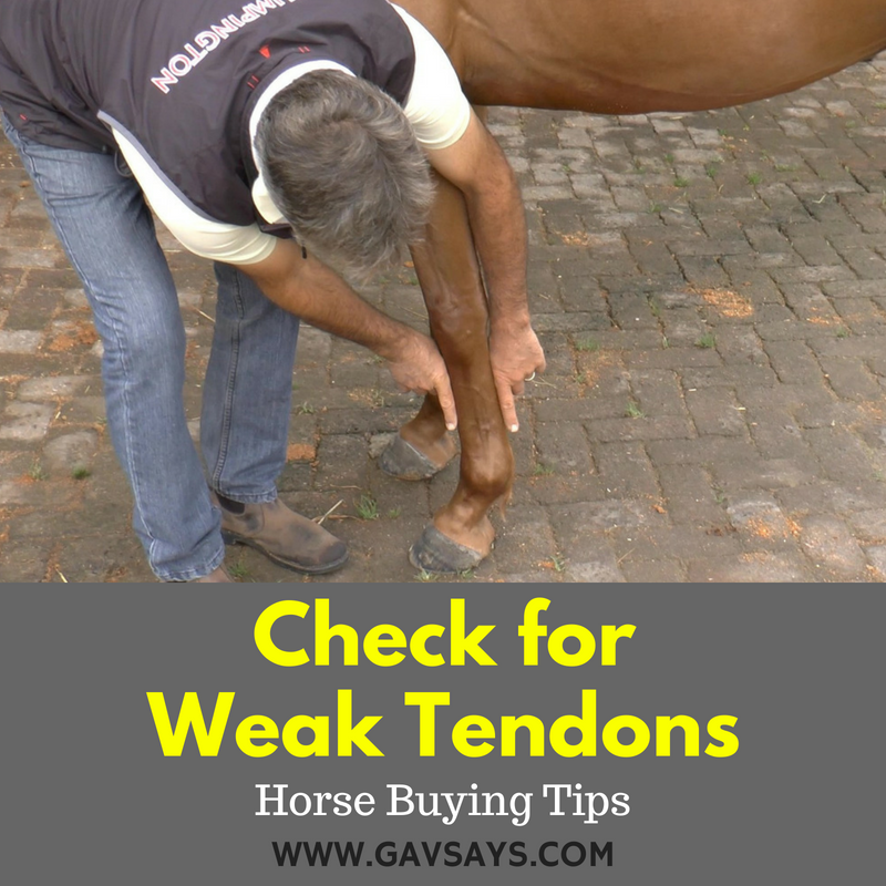 Horse Buying Tip: Check for Weak Tendons...