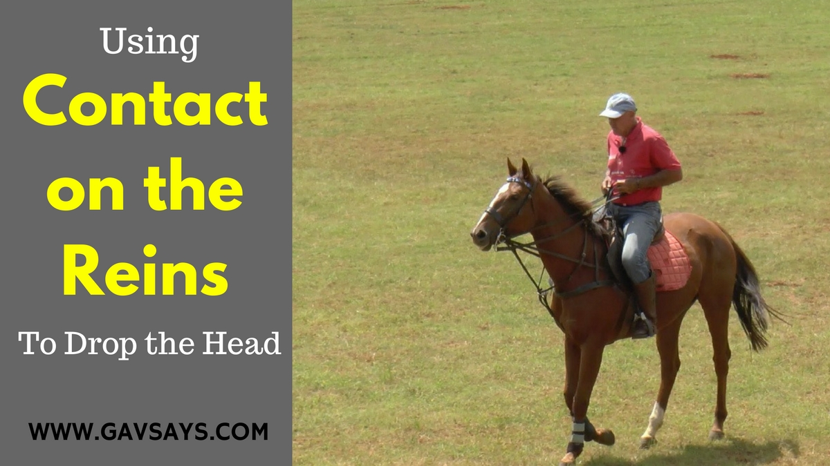 Using Contact on the Reins to get the Right Response