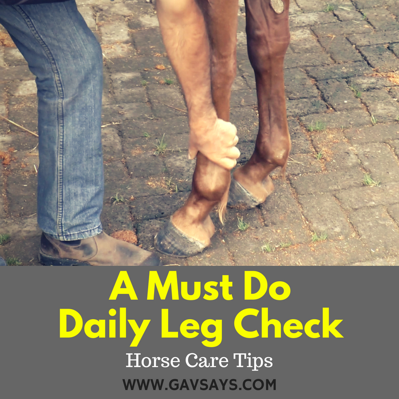Daily Leg Checks You Must Do - Horse Care Tips