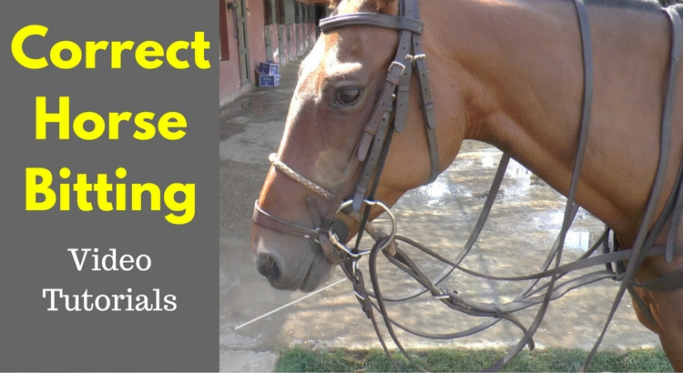 Correct Horse Bitting Example with Primavera 2 - Further Experiments & Progress