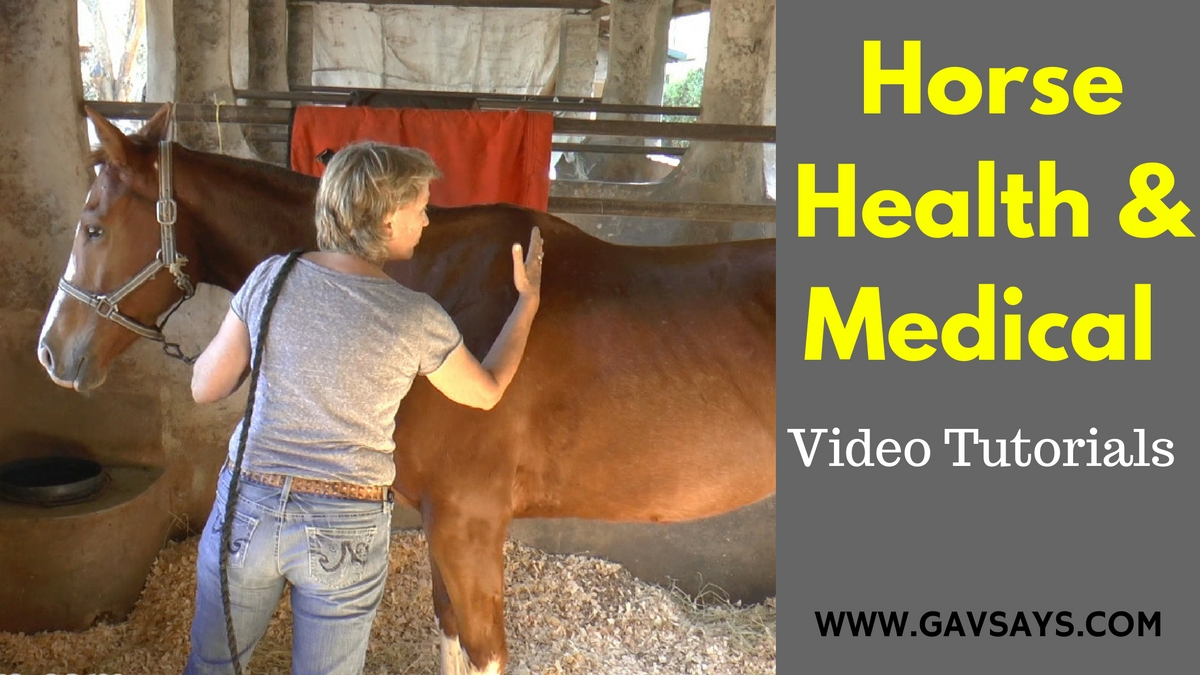 Horse Health, Care & Medical - Video Tutorials