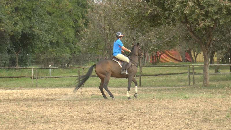 Horse Riding Arena Building Tips: A