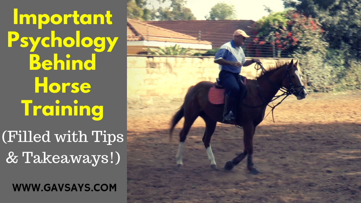 Horse Training Videos Gavsays Com