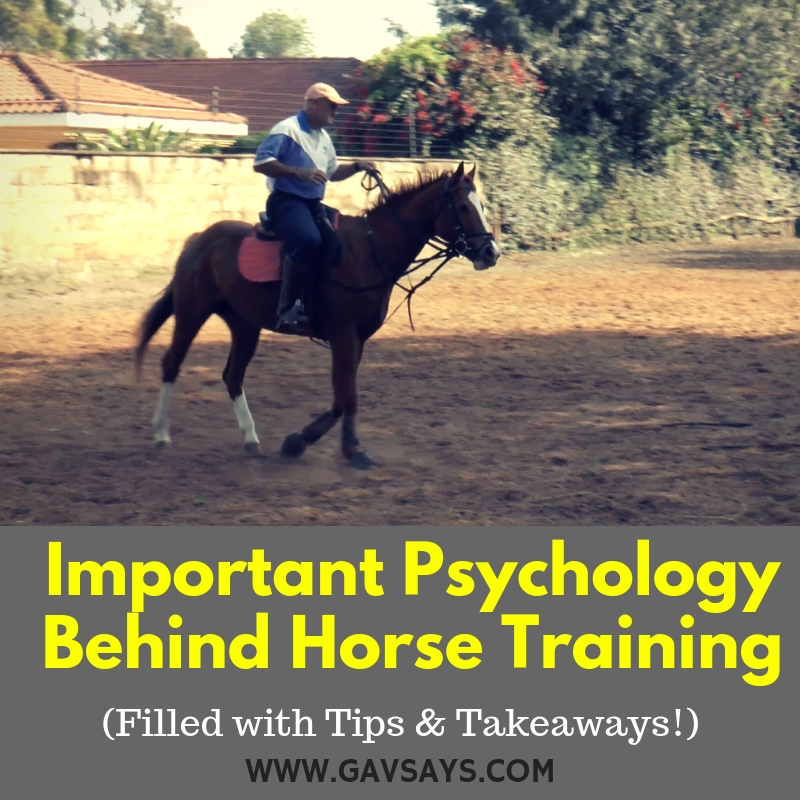 Important Horse Training Psychology - Understanding the Right & Wrong Way of Training