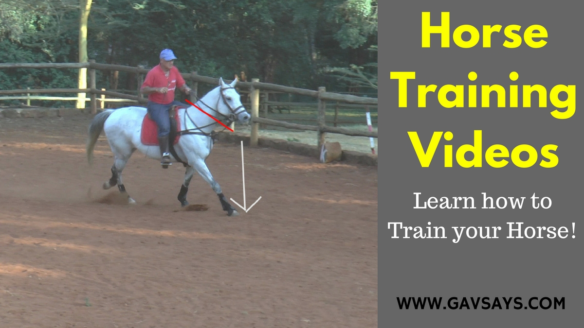 Gavsays Com Horse Training Videos More