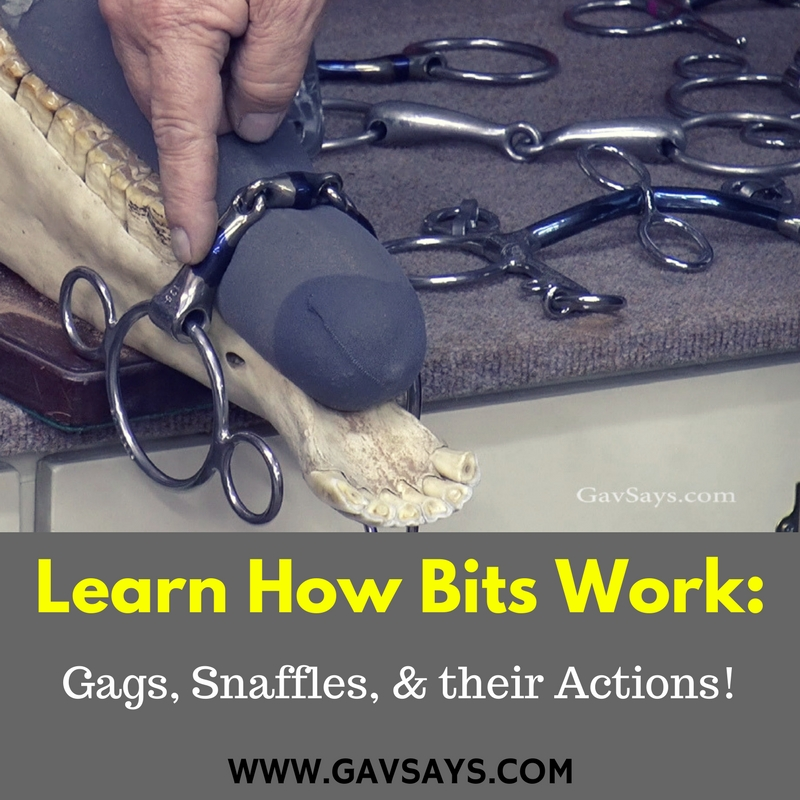 How Horse Bits Work - Gags, Snaffles & their Actions