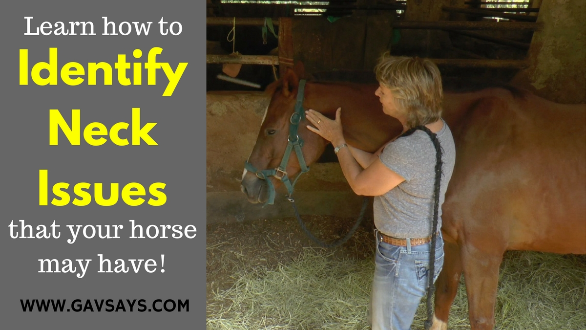 Identifying if your horse has Neck Problems - with Anna Mason