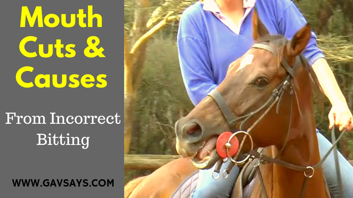 Mouth Cuts & Causes from Incorrect Bitting - & How to fix