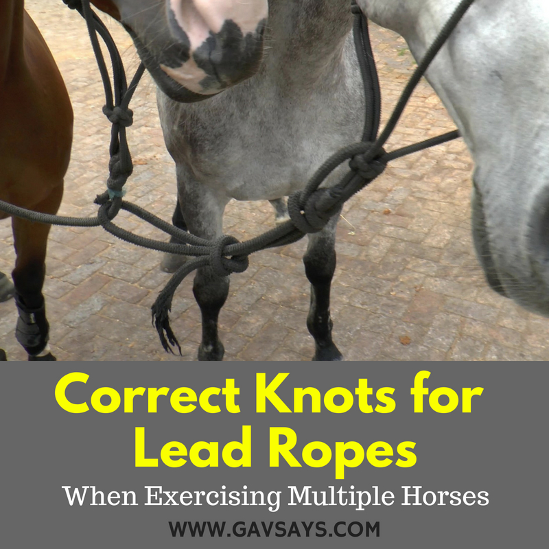 How to Tie Knots for Lead Ropes when Exercising Multiple Horses