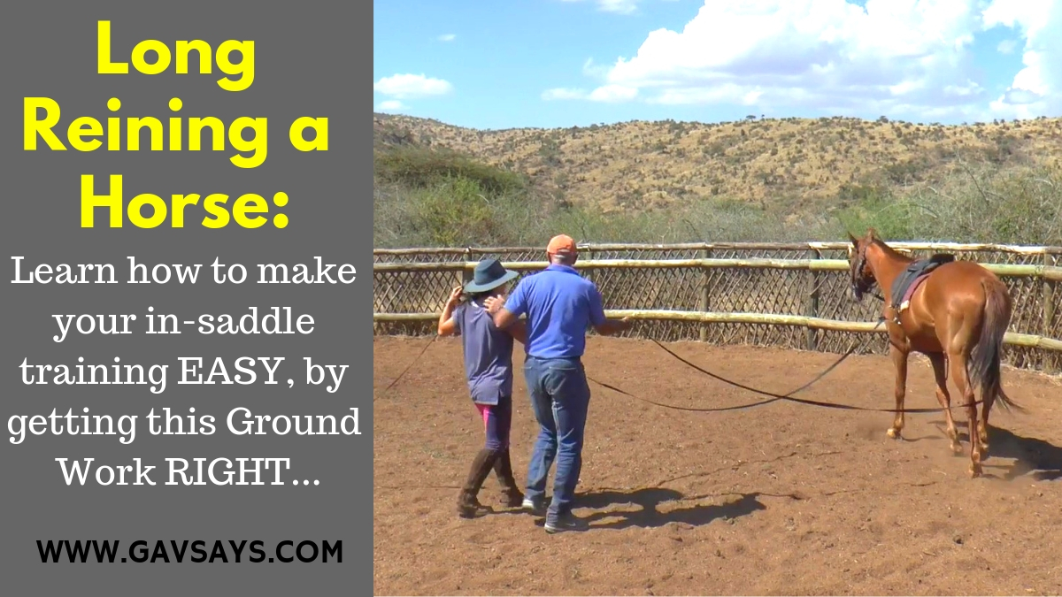 The How-To of Long Reining a Horse: Making In-Saddle Training EASY