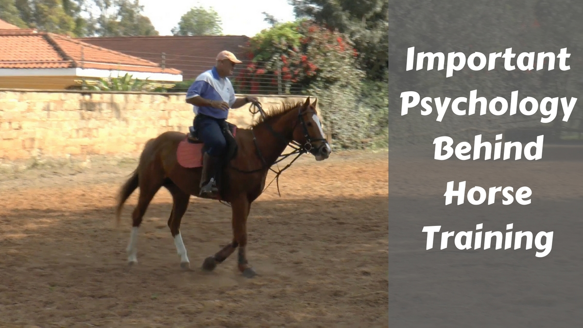 Important Horse Training Psychology - The Right & Wrong Way