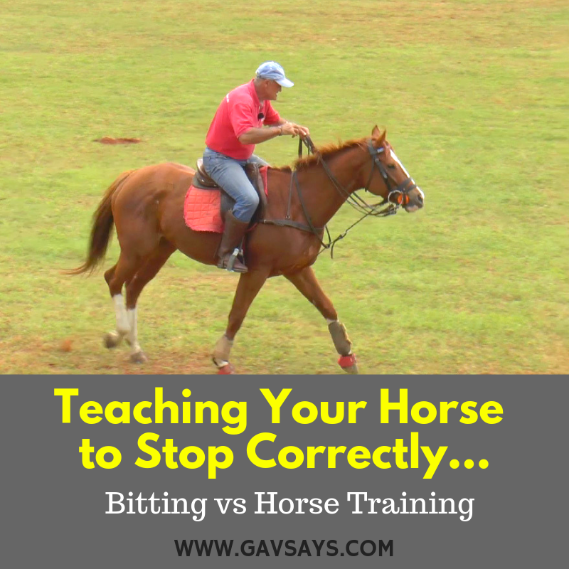 Teaching a Horse to Stop Correctly - Bits vs Training