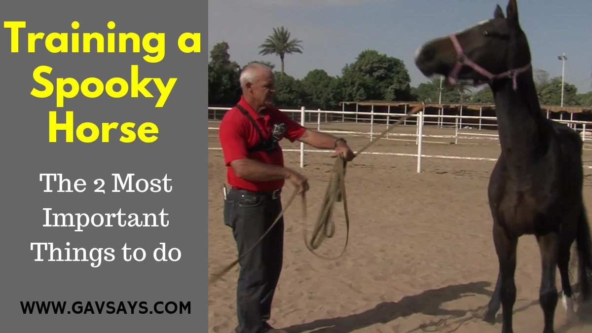 Training a Spooky Horse: The 2 Most Important Things to do