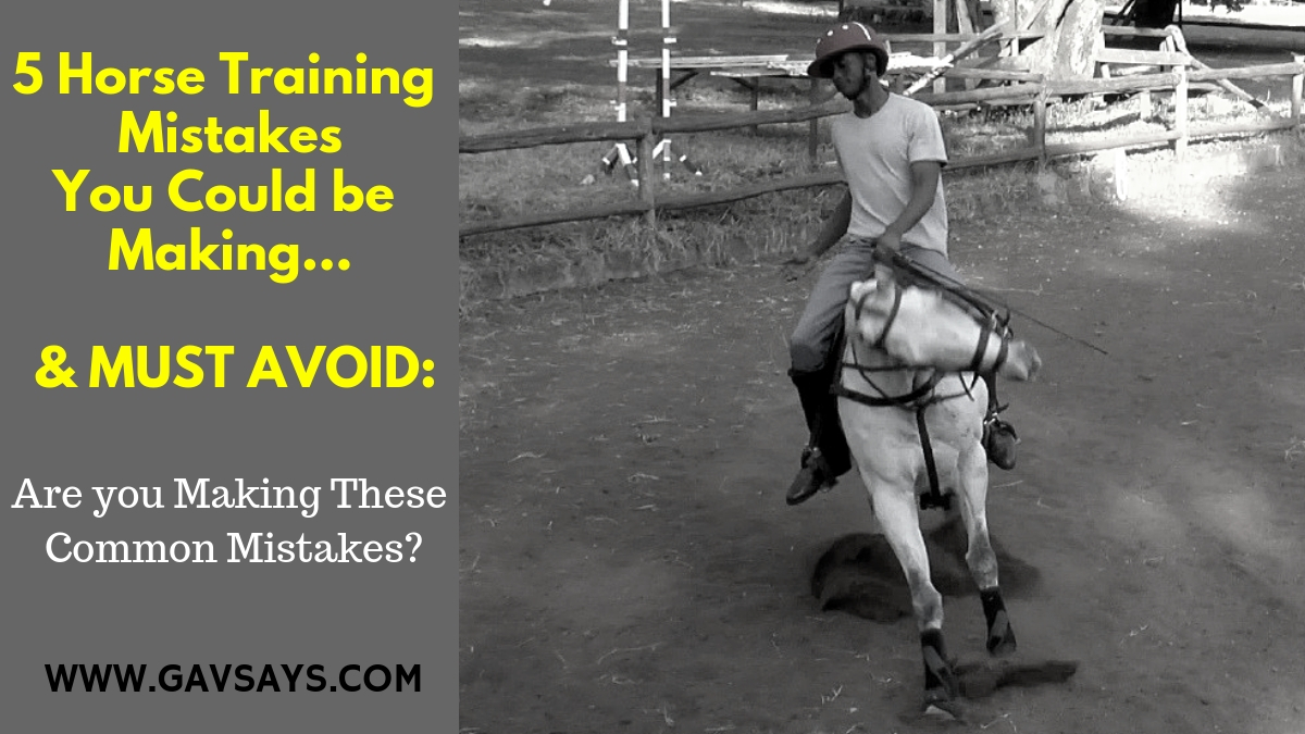 5 Horse Training Mistakes You're Making & Need to Avoid