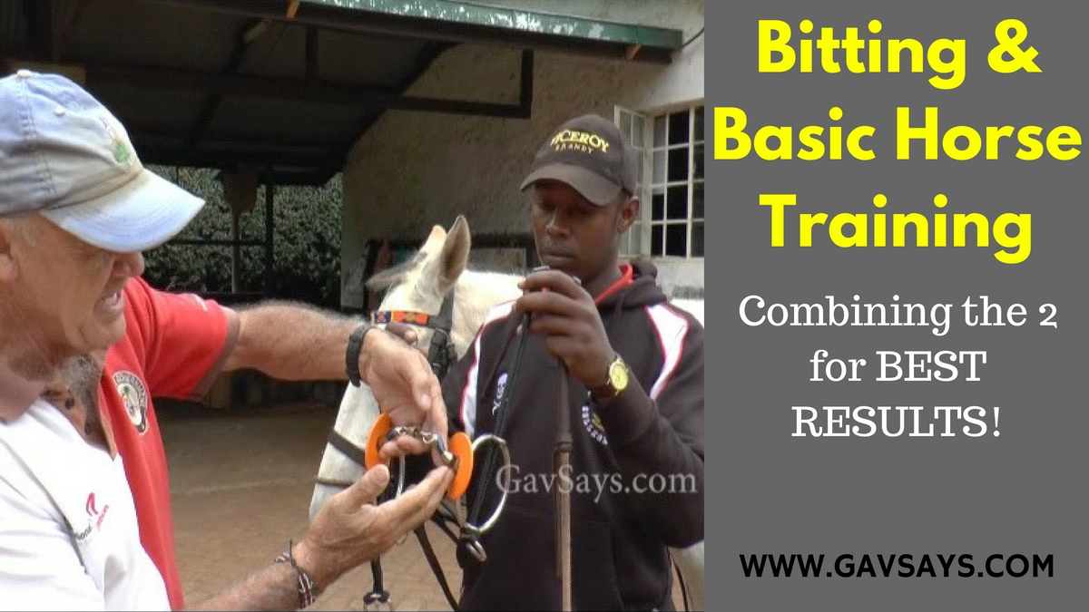 Combining Bitting & Basic Horse Training for the Best Results...