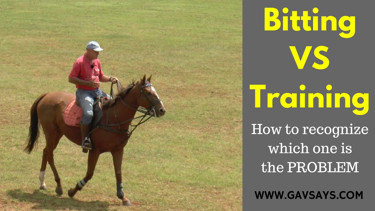 Bitting vs Horse Training - How to Tell What The Problem is