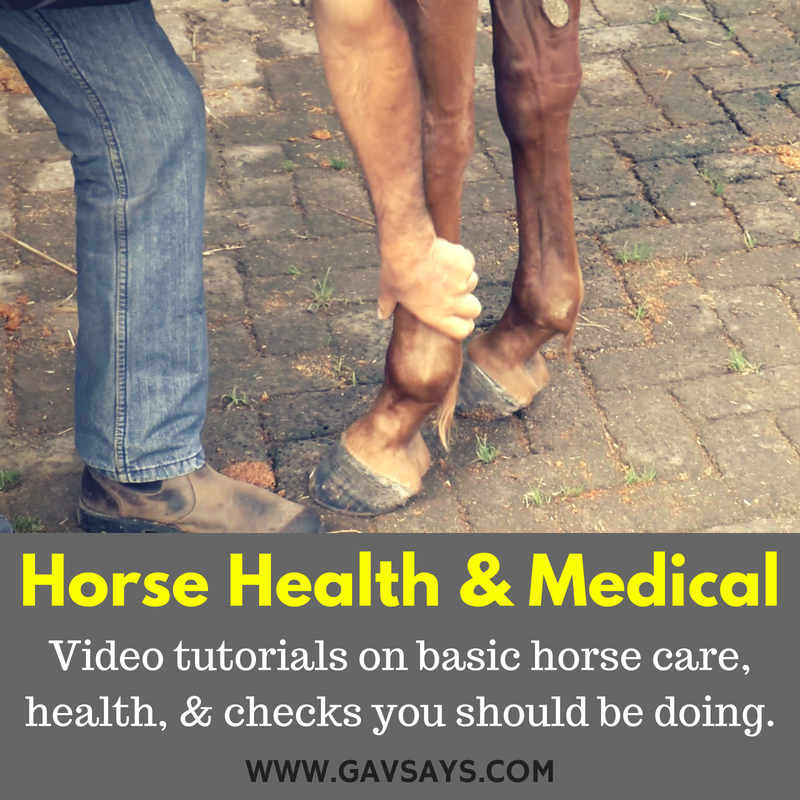 Horse Health, Care & Medical - Video Tutorials