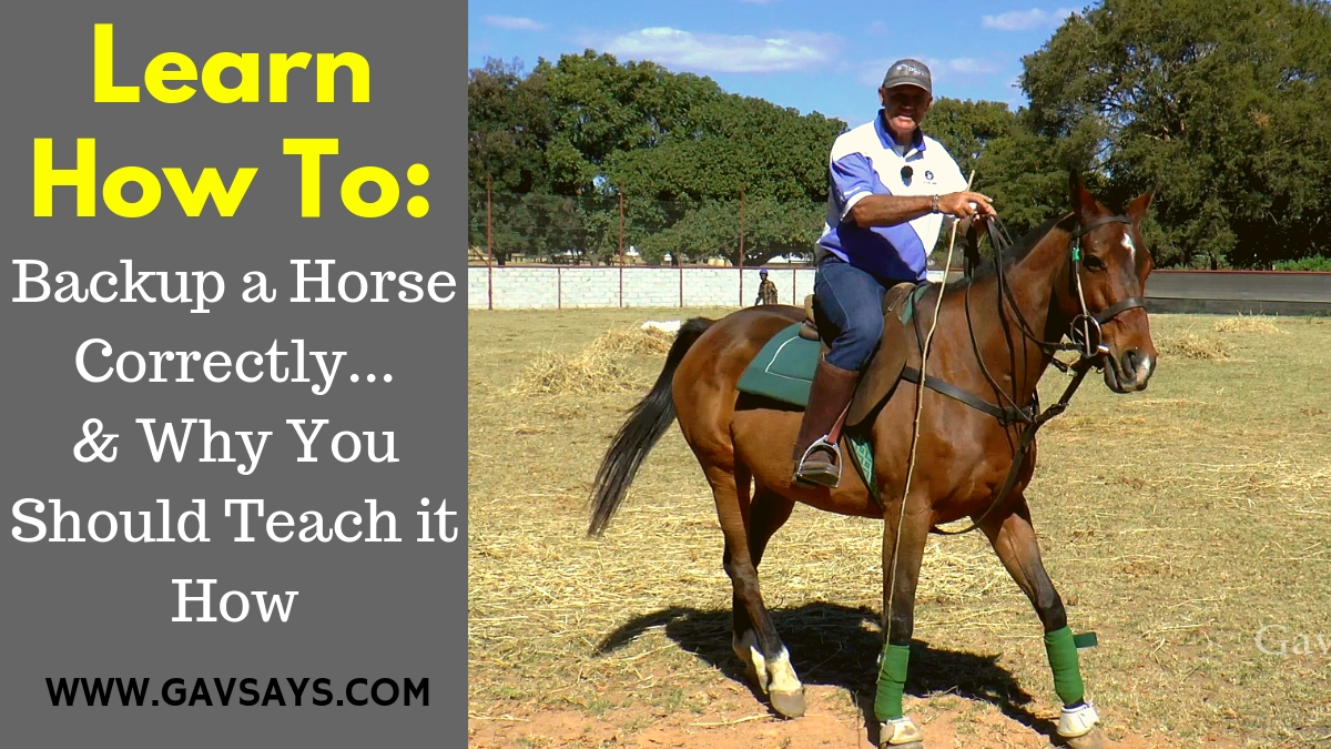 Learn How to Backup a Horse: & Why it's so important to teach...