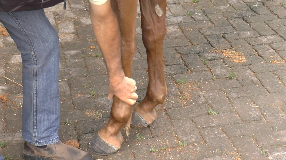 How to Prevent Injuries to Your Horse -> Before They Happen...