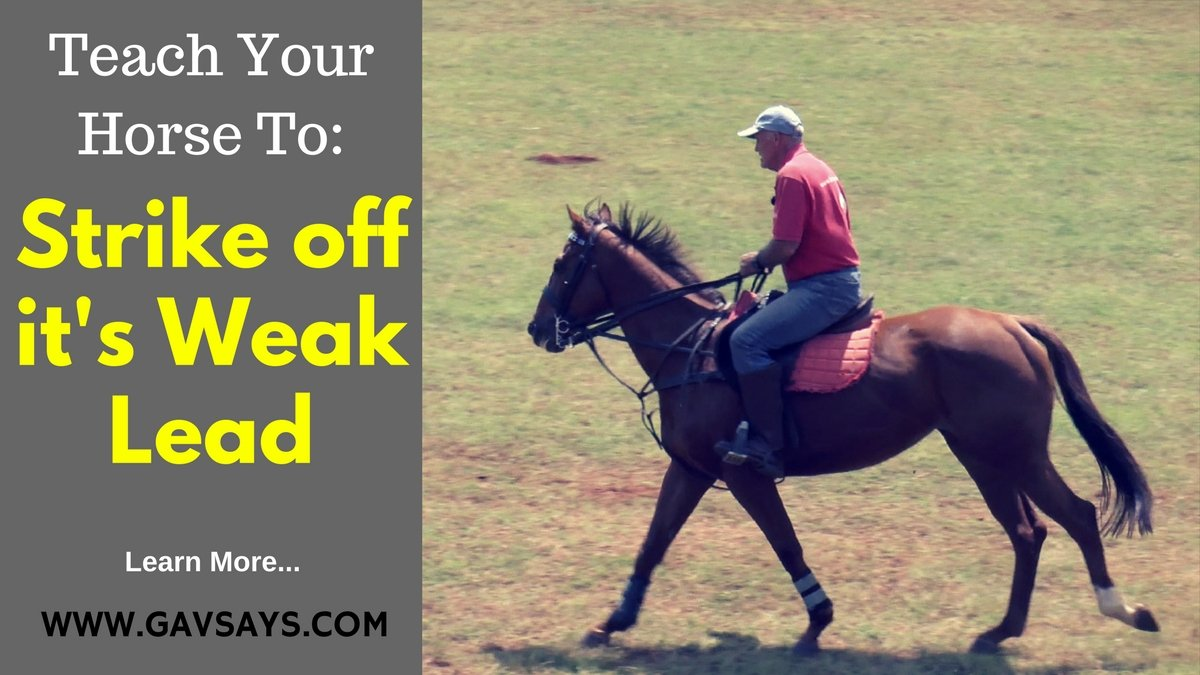 How to Teach Your Horse to Strike off it's Weak Lead...