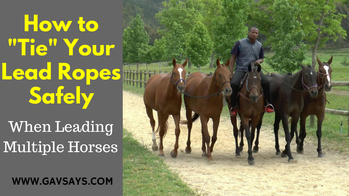 Learn the Correct Tying of Lead Ropes When Exercising Multiple Horses